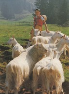 Chèvres Appenzelloises. Appenzeller Ziege, Die Kleinste Der Sieben Schweizer Rassen - Animaux & Faune