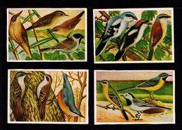 Bilder 4 Images Allemandes HERBA Les Oiseaux De Chez Nous Grimpereau - Pie Grièche - Rossignol - Bergeronette  TTB - Vieux Papiers