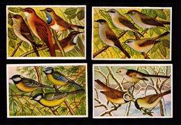 Bilder 4 Images Allemandes HERBA Les Oiseaux De Chez Nous Gobe-mouches - Fauvette Babillarde - Mésanges - Mésange Huppée - Vieux Papiers