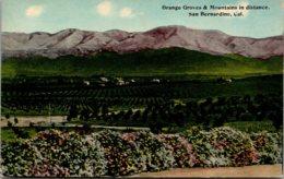 California San Bernardino Orange Groves And Mountains In The Distance - San Bernardino
