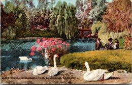 California Los Angeles Swans At East Lake Park 1917 - Los Angeles