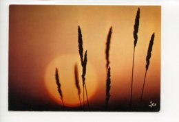 Piece Sur Le Theme De A L Heure Ou Le Soleil Vient Forger Des Lampyres - France