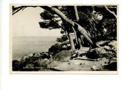 Piece Sur Le Theme De Cap Martin - La Pinede - Autres Communes