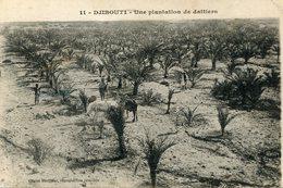 DJIBOUTI(ARBRE) DATTE - Gibuti