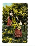 Piece Sur Le Theme De La Cueillette Du Mimosa Sur La Cote D Azur - Autres Communes