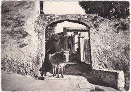 06. Gf. LA COLLE-SUR-LOUP. Les ânes Ne Volent Pas, Ils Se Reposent. 5 - Autres Communes