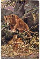 ANIMAUX 122 : Lionne Et Ses Petits - Lions
