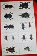 Rare Fiche Illustrée Les Insectes Bons Points école - Andere
