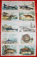 Rare Fiche Illustrée Baleines,dauphins ..... Bons Points école - Andere