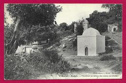 CPA Maroc - Rabat - Marabout Au Milieu Des Ruines Du Chellâ - Lettres & Documents