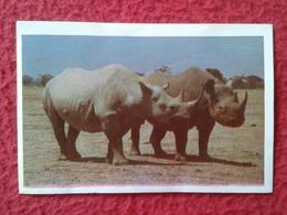 SPAIN ANTIGUO CROMO RARE OLD COLLECTIBLE CARD EL RINOCERONTE AFRICANO RHINO RHINOCEROS RHINOS RHINOCEROSES MATUTANO 1968 - Sin Clasificación