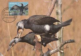 D36209 CARTE MAXIMUM CARD FD 2005 NETHERLANDS - GRAND CORMORAN AALSCHOLVER CP ORIGINAL - Birds