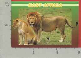 CARTOLINA VG KENIA - KENYA - Wildlife Of East Africa - Lions - 10 X 15 - ANN. 2000 - Kenia