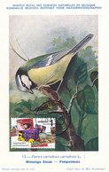 D36210 CARTE MAXIMUM CARD RR FD 2011 NETHERLANDS - BLUE TIT MESANGE BLEUE - DETAIL ON STAMP CP MUSEUM ORIGINAL - Sperlingsvögel & Singvögel
