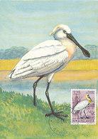 D36212 CARTE MAXIMUM CARD 1972 YUGOSLAVIA - SPATULA BLANCHE PLATALEA SPOONBILL CP PHOTOCARD - Birds
