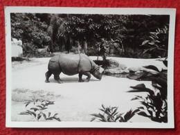 SPAIN ? ANTIGUA FOTO OLD ORIGINAL PHOTO RINOCERONTE RHINO RHINOCEROS RHINOS RHINOCEROSES ZOO ?. A IDENTIFICAR VER IMAGEN - Photographs