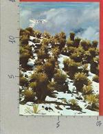 CARTOLINA VG VENEZUELA - Frailejones En La Sierra De Merida - 10 X 15 - ANN. 1978 - Venezuela