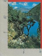 CARTOLINA VG VENEZUELA - Laguna Negra Con Pico Gavilan Al Fondo Los Andes - 10 X 15 - ANN. 1977 - Venezuela