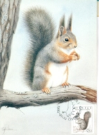 CM-Carte Maximum Card # 1992-Suède,Schweden # Animaux,animals #Rongeur,rodent,Nagetier # Écureuil,Squirrel,Eichhörnchen - Knaagdieren