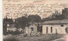 Gironde - Chenil De LYRAN Près Bazas - Chiens Chasse - Bazas