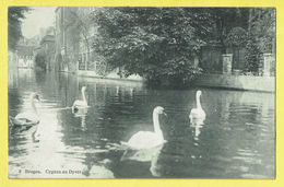 * Brugge - Bruges (West Vlaanderen) * (JDC Globe - Edition Artistique, Nr 8) Cygnes Au Dyver, Swan, Zwaan, Reien, Quai - Brugge