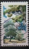 Frêne (Arbre) - France - 2018 - France
