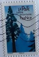 Sequoia Géant (Arbre) - France - 2018 - France