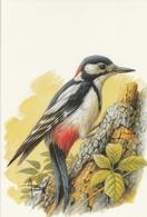 274. BUZIN. LE PIC EPEICHE - Oiseaux