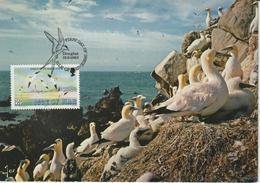 Man Carte Maximum 1983 Oiseaux Fou De Bassan 220 - Isle Of Man