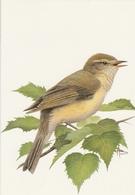 117. BUZIN. LE POUILLOT  FITIS - Oiseaux