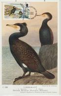 Man Carte Maximum 1983 Oiseaux Cormoran 222 - Isle Of Man
