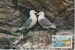 Man Carte Maximum 1983 Oiseaux Mouette 223 - Isle Of Man