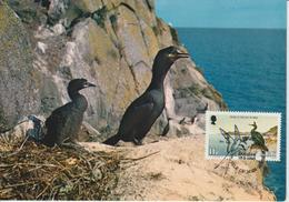 Man Carte Maximum 1983 Oiseaux Cormoran 224 - Isle Of Man