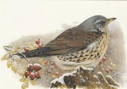 124. BUZIN. LA GRIVE LITORNE - Oiseaux