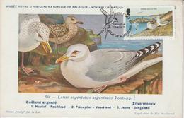Man Carte Maximum 1983 Oiseaux Goeland 226 - Isle Of Man