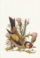 127. BUZIN. LE CHARDONNERET ELEGANT - Oiseaux