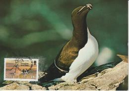Man Carte Maximum 1983 Oiseaux Pingouin 227 - Isle Of Man