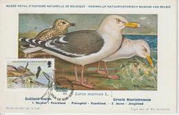 Man Carte Maximum 1983 Oiseaux Goeland 228 - Isle Of Man