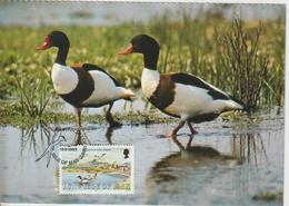 Man Carte Maximum 1983 Oiseaux Tadorne 229 - Isle Of Man
