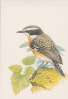 130. BUZIN. LE  TRAQUET TARIER - Oiseaux