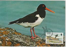 Man Carte Maximum 1983 Oiseaux Huitrier 230 - Isle Of Man