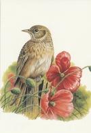 131. BUZIN. L'ALOUETTE DES CHAMPS - Oiseaux