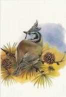 133. BUZIN. LA MESANGE HUPPEE - Oiseaux