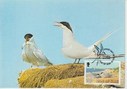 Man Carte Maximum 1983 Oiseaux Sterne 241 - Isle Of Man