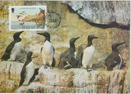 Man Carte Maximum 1983 Oiseaux Guillemots 242 - Isle Of Man