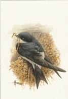 144. BUZIN. L'HIRONDELLE DE FENÊTRE - Oiseaux