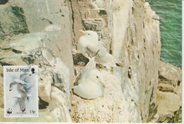 Man Carte Maximum 1989 Oiseaux Mouette 411 - Isle Of Man