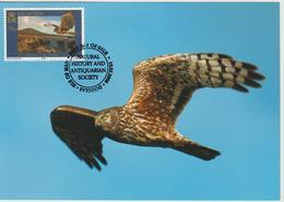 Man Carte Maximum 2006 Oiseaux Busard 1298 - Isle Of Man