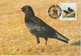Man Carte Maximum 2006 Oiseaux Crave à Bec Rouge 1303 - Man (Ile De)
