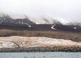 1 AK Zavodovski Island * Gehört Zu Den South Sandwich Islands * Britisches Überseegebiet Im Südatlantik * - Ansichtskarten